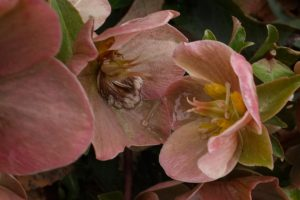06-bbg-pink-flower