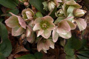 13-bbg-pink-flower2