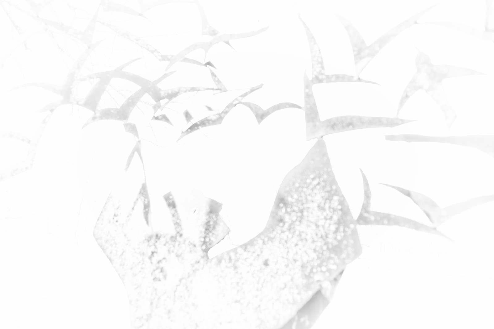 michael-webster-soitude02
