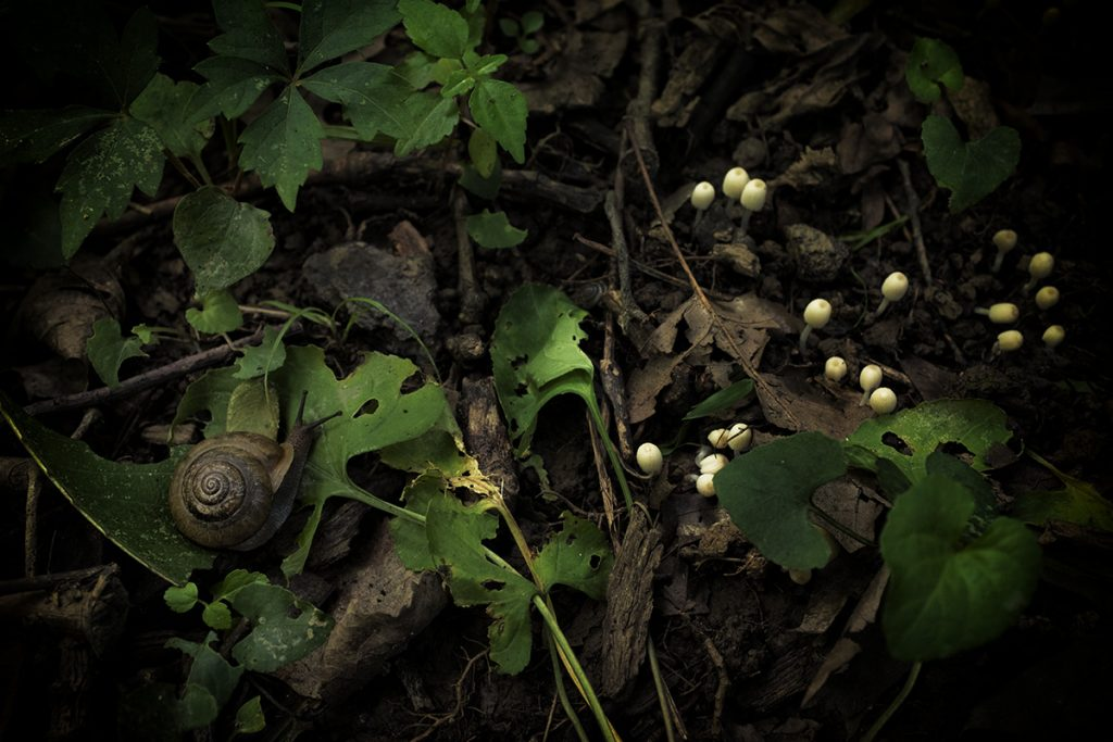 snail-mushrooms