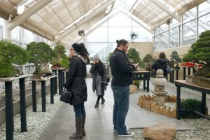 05-bbg-bonsai-museum