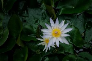 12-white-yellow-hothouse-flower